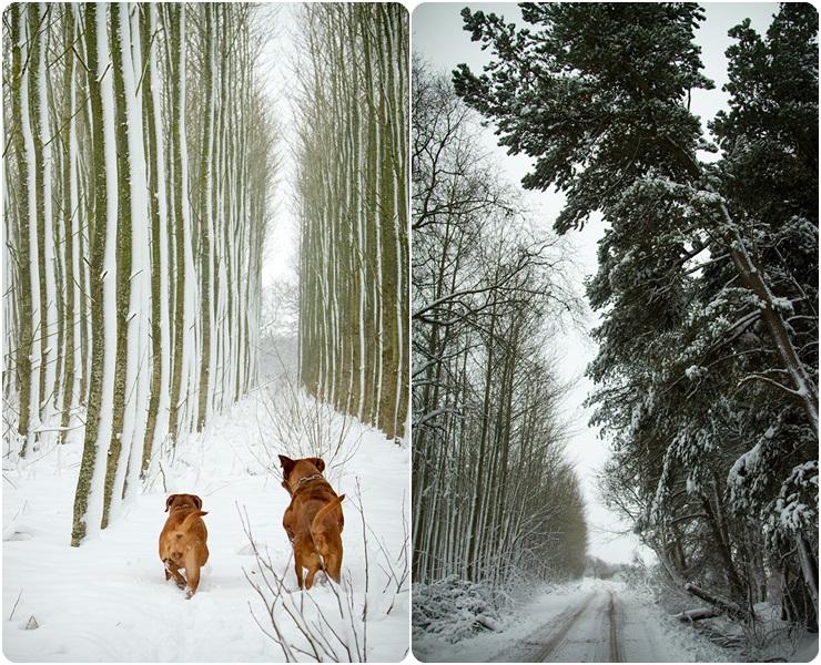 snepage