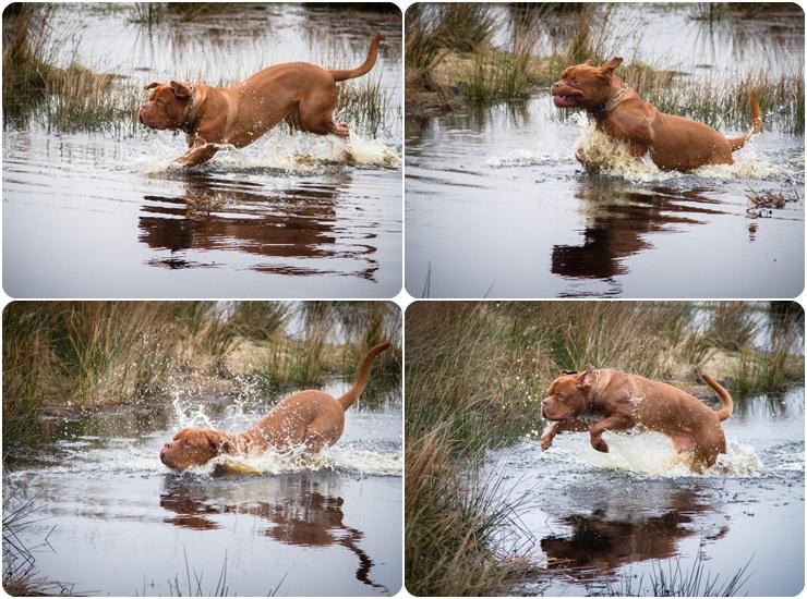 vandhundpage1